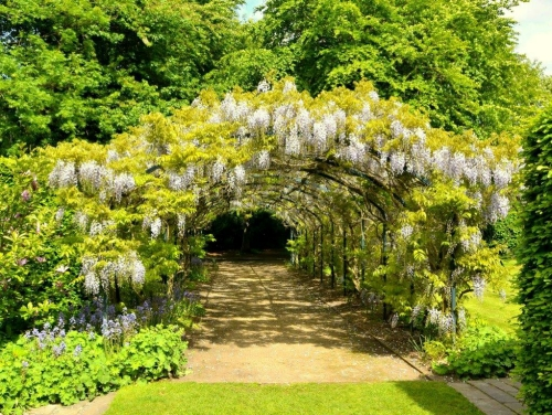 Photo of a wisteria archway in the gardens