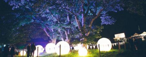 Purple trees and lights