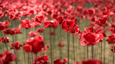 The poppies installation by ceramic artist Paul Cummins, with setting by stage designer Tom Piper, in the dry moat of the Tower of London marks 100 years since the start of the First World War. Volunteers will continue to plant 888,246 ceramic poppies the moat, one for each British and Colonial fatality during the First World War. The last one will be planted on Armistice Day, 11th November 2014.©Richard Lea-Hair and Historic Royal Palaces