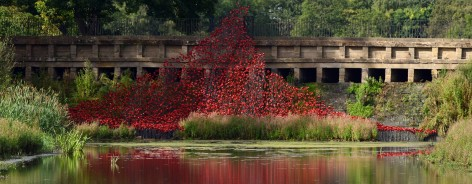 Photo of a wave of poppies in a lake