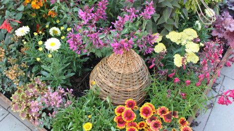 Bee hive amid flowers