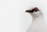 Photograph of a bird