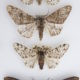 Moths at the Climate Control exhibition