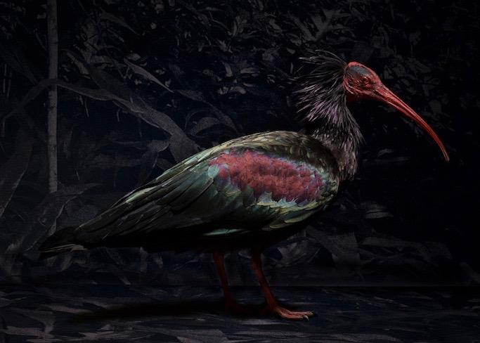 A stuffed ibis