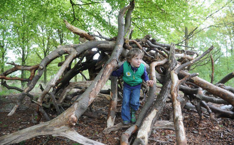 Log Pile at Dunham Massey