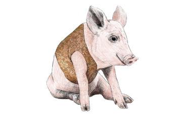 Piglet courtesy Alex Rinsler