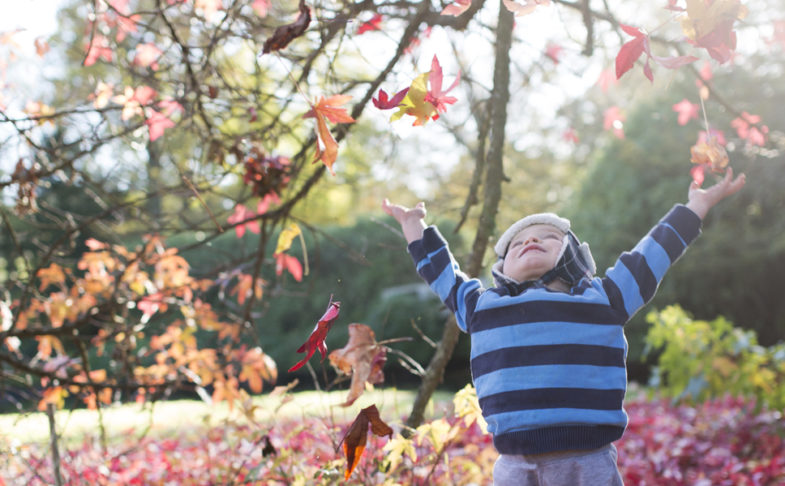 Experience The Magic of Trees at Beningbrough Hall, Gallery and Gardens