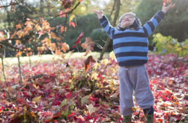 Autumn at Beningbrough Hall, Gallery and Gardens -with plenty of family things to do.
