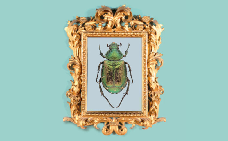 Magnificent Minibeasts - a green beetle is shown in a gold frame.