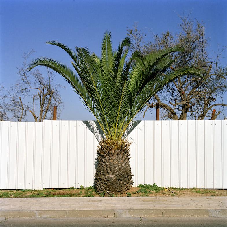 Untitled, from 'Garden State', Corinne Silva