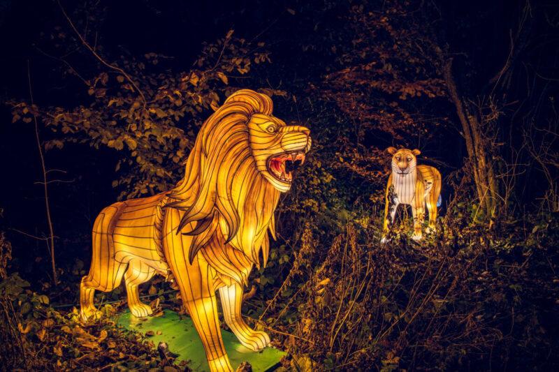 Lightopia at Heaton Park
