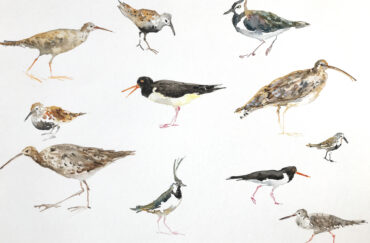 Fledge: A Year of Birds at Contemporary Six