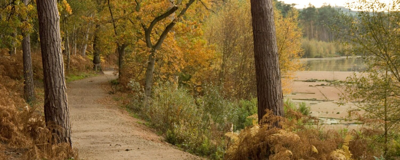 Delemere Forest