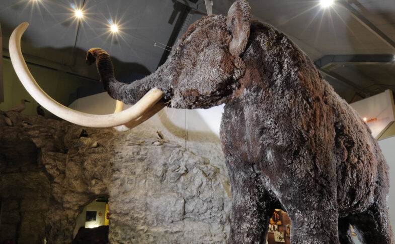 Wooly mammoth Hull and East Riding Museum