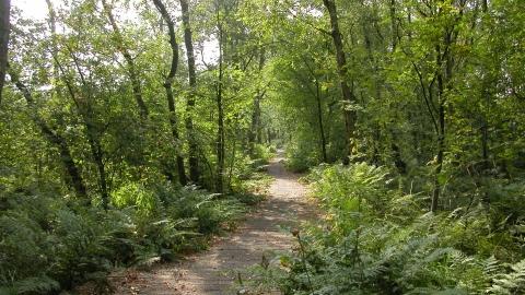 Danes Moss Nature Reserve