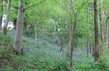 Aykley Wood